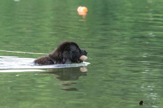 Eleanor & Pi (pulling boat)
